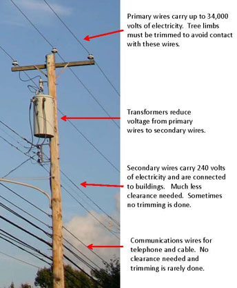 Power Pole Wiring Diagram from www.pottstowntrees.org
