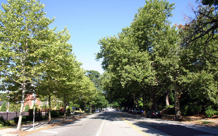 J1-hylton-trees-High-Street