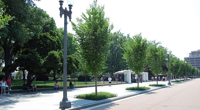 Square Landscape Around Tree